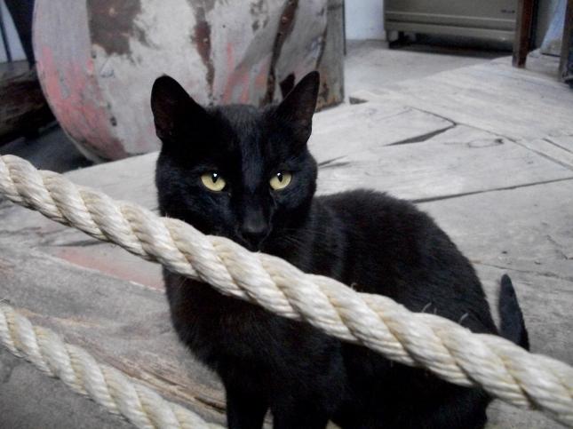 Jorge, el gato del ex Presidio de Ushuaia